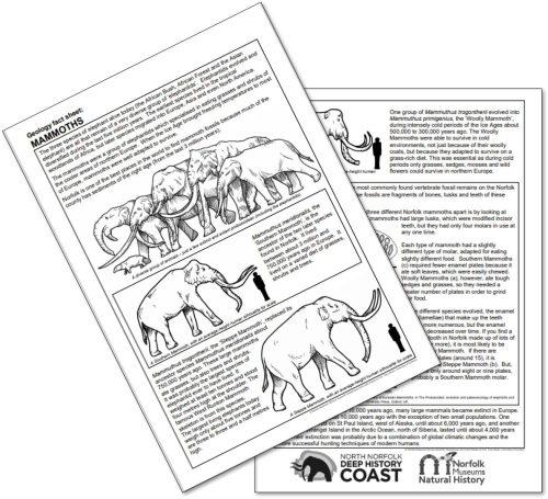 Image showing pdf of mammoth fact sheet